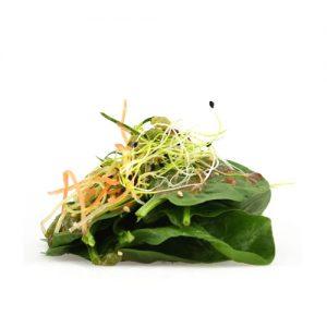 Salade d algues pices et concombre koi sushi bar for Koi sushi aix